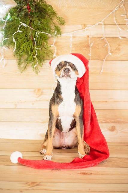 2017 Christmas-7107