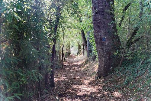08-Chemin creux