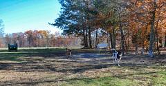 Turkey Hill Dog Park 93