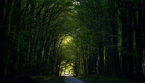 Durch den Wald; Wohlde, Stapelholm (6)