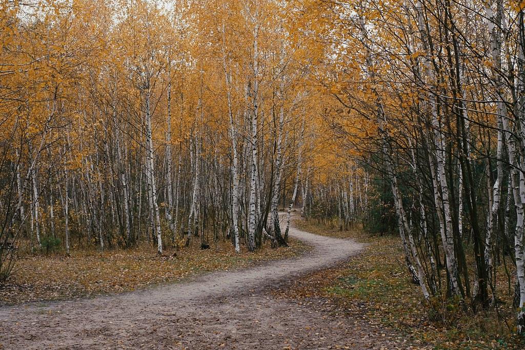 Последнее пламя осени / The Last Flame of Autumn