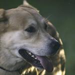 2011-08-30_18-38-07 - Hund - Schatten - LIcht - lens test