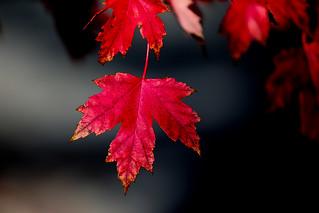 Folhas... para contemplar