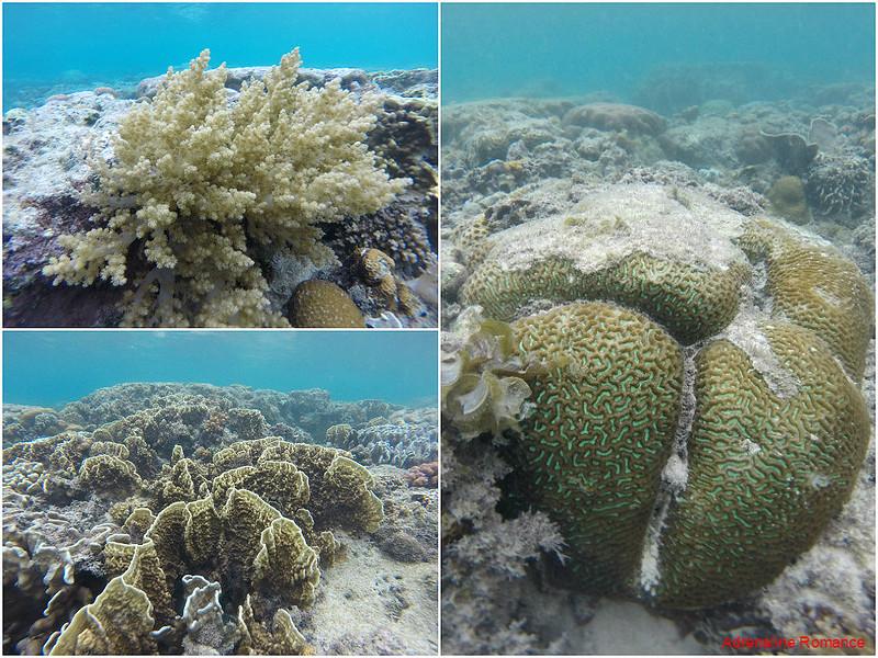 Healthy corals!