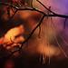 Guillemets d'automne