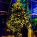 Christmas Glow RHS Wisley 02 December 2017 (23)