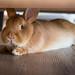 A new tenant under the sofa / Un nuevo inquilino debajo del sofá