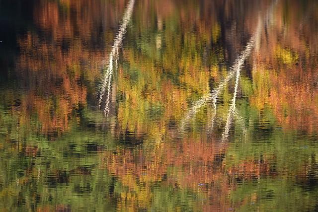 Stewart Park Abstract