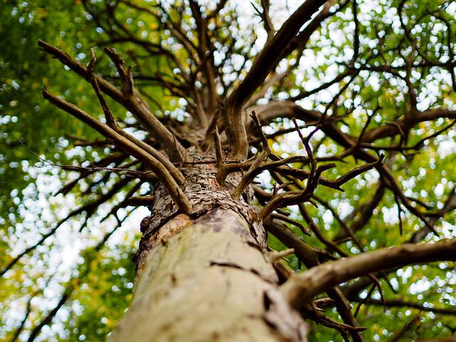 dead_tree_crown