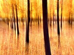 Equilibrium in Fall Equinox