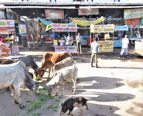 i-Bundi-Pushkar-route (5)
