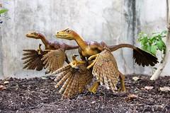 Bambiraptor (Bambiraptor feinbergi)