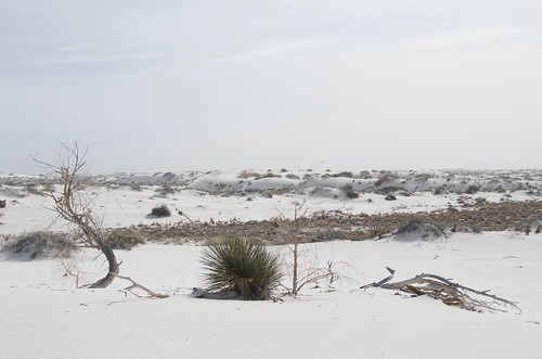 White Sands dead tree and cactus