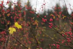 colors of November