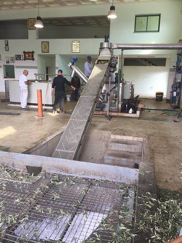 At the Olive Pressing Plant