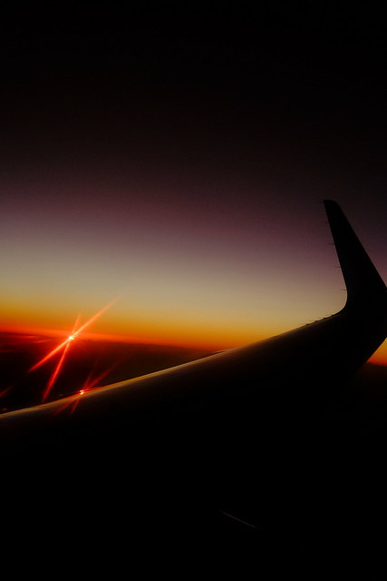sunset wing