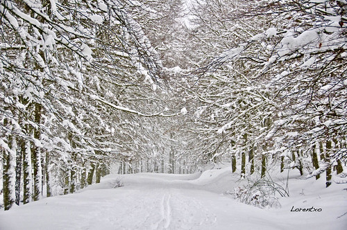 Aralar con nieve