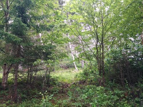 Brush #pei #princeedwardisland #belfast #campbuchan #scouts #northumberlandstrait #latergram