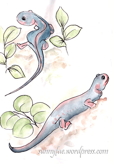 sketch of two newts