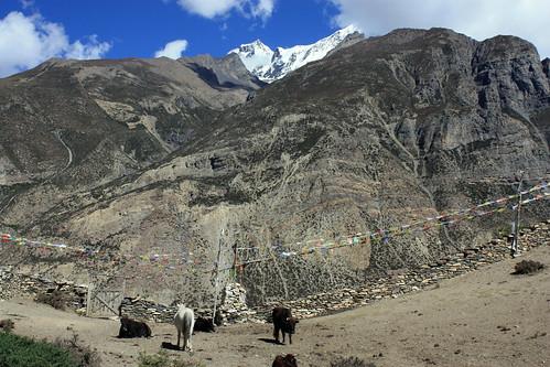 J13 : 3 octobre 2017 : 7ème jour du trek : Journée repos à Manang (3540 m) avec rando sur la moraine du Ganggapurna (3900 m)