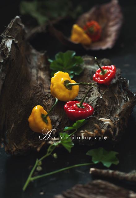 the habanero chili