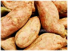 Recently harvested sweet potatoes of Ipomoea batatas (Sweet Potato, Sweet Potato Vine, Keledek in Malay), 7 Nov 2017