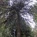 arboretum hike