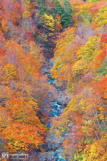 秋色是山巒中的一抹紅 | 08