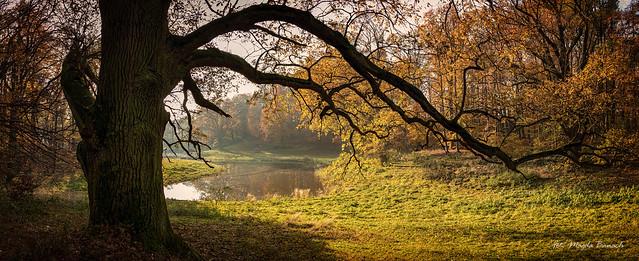 Wąsowo Park