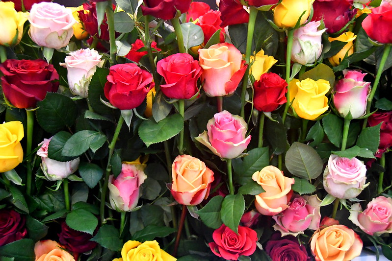38276818756 f2ebc6f033 c The Lost Language of Flowers: Why We Give Roses on Valentines Day