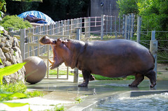 San Francisco Zoo 550