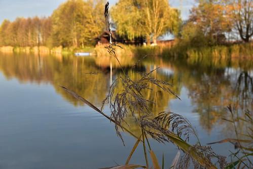 Germeringer See im Herbst
