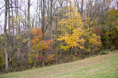 Wheaton Regional Park 9 Nov 2017 (9)