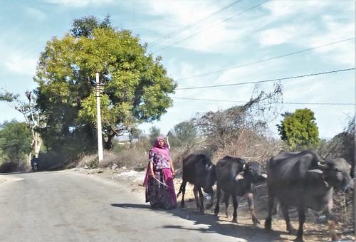 i-udaipur-kumbhalgarh-Route (10)