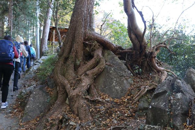 奥多摩 森林セラピー