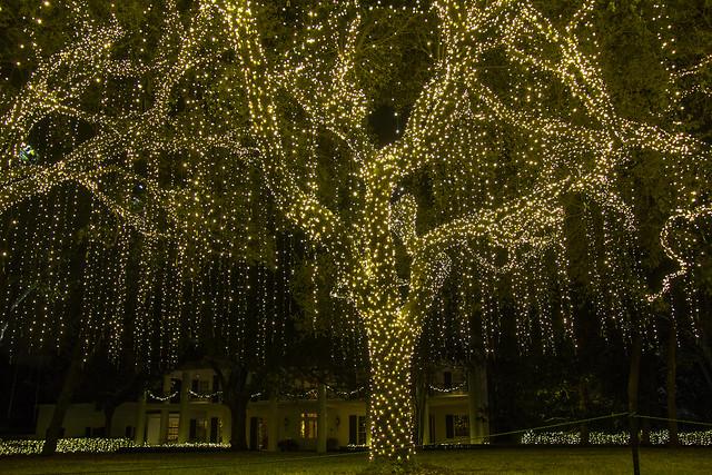 Christmas lights_12