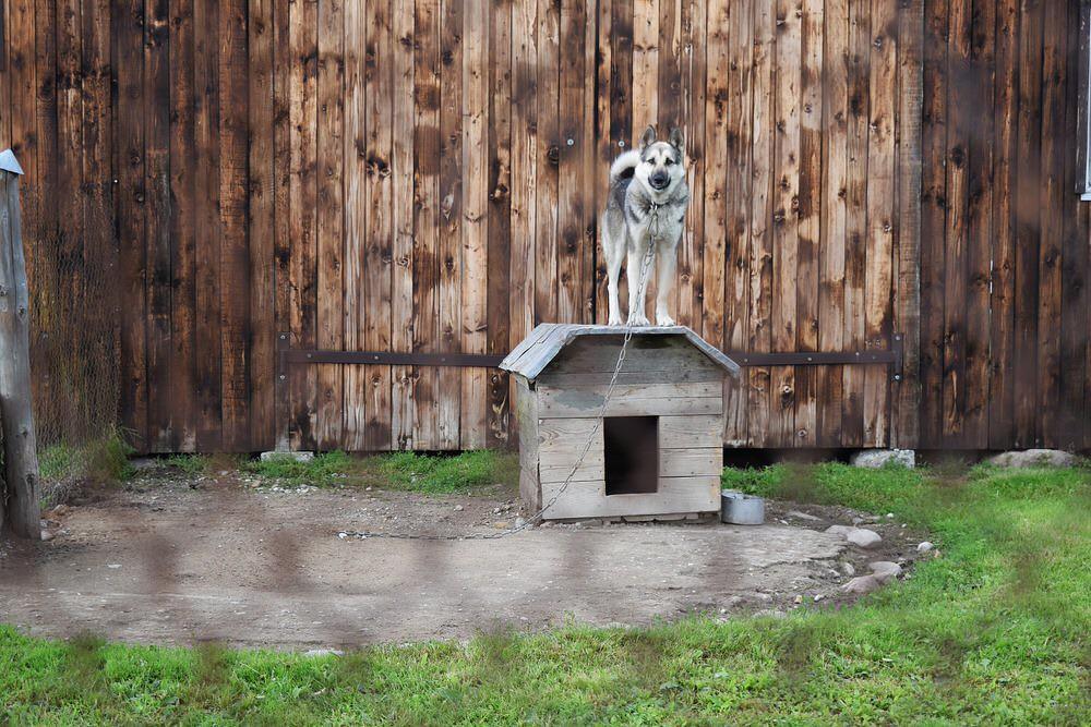 dog-2755488_1920