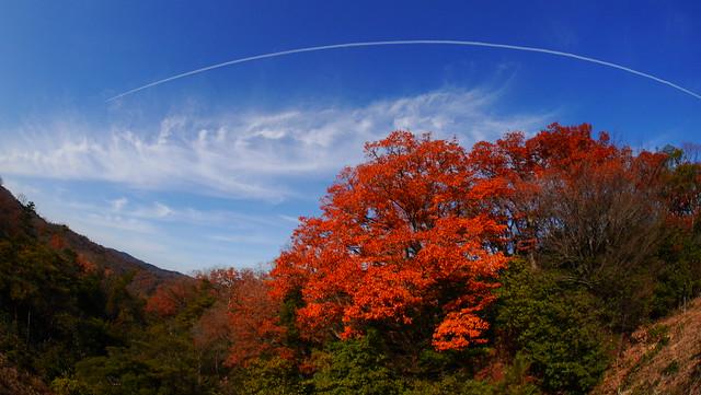 亀山 (75)