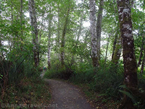 Along the Netul River Trail near Fort Clatsop, Lewis & Clark National Historical Park, Oregon