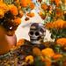 171101_Michoacan 09 por Rob_Serrano