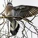 170219_Garden Birds_0023