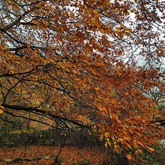 Breathtaking colours on the Heath today. #autumn:maple_leaf: #london