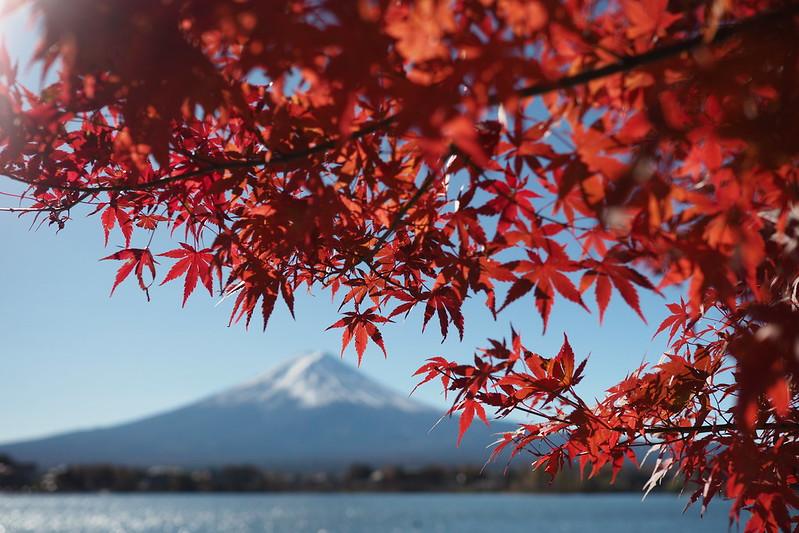 紅楓富士山|Fujisan