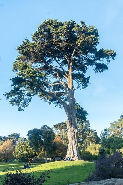 Under the Tree - SF Botanical Garden