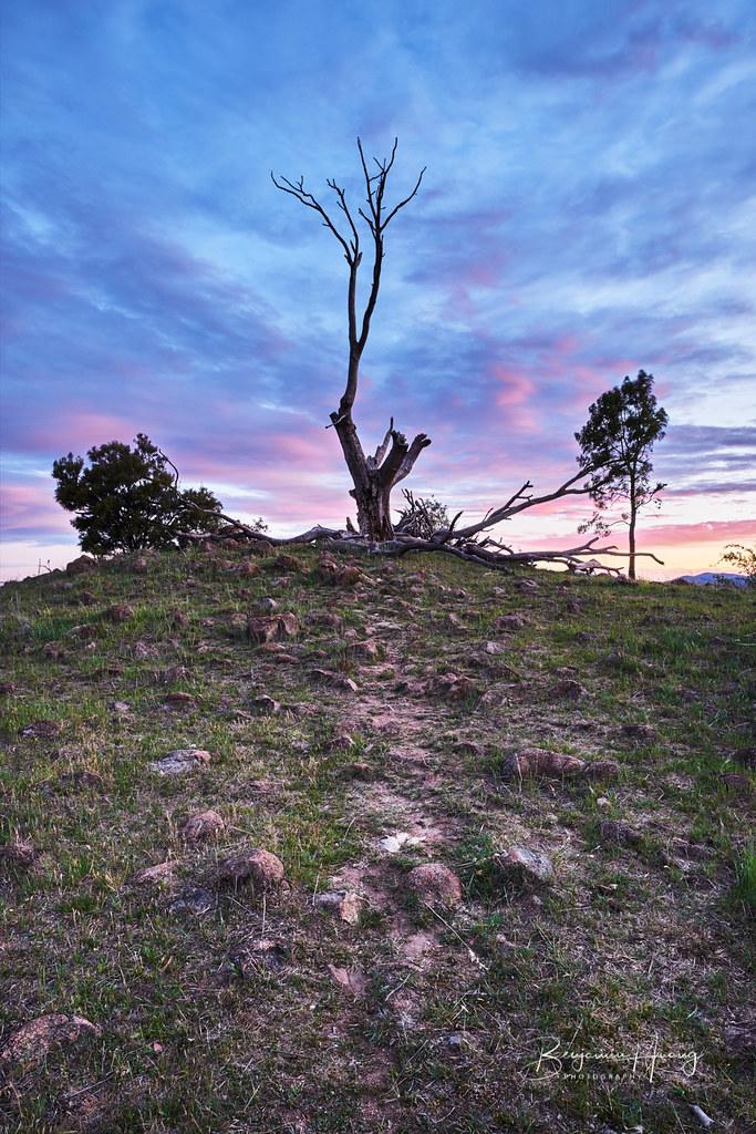 Urambi Hills Trees