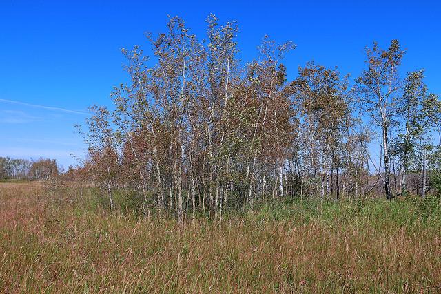 Early Fall Scene_6986