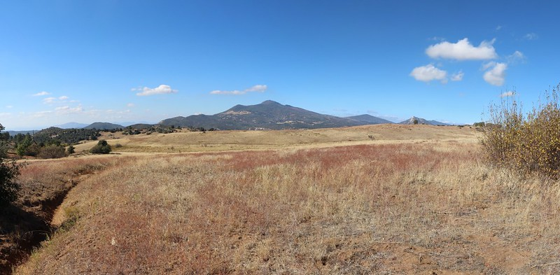 Looking north toward Cuyamaca Peak from the upper end of the Harvey Moore Trail