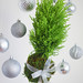 Christmas Kokedama Photo courtesy Lynne Tischler, AAF, CPFD, PFCI, with Keith Osborne and Jessie Thompson of Your Enchanted Florist in St. Paul, Minnesota. https://yourenchantedflorist.net/