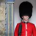 Windsor - On Guard