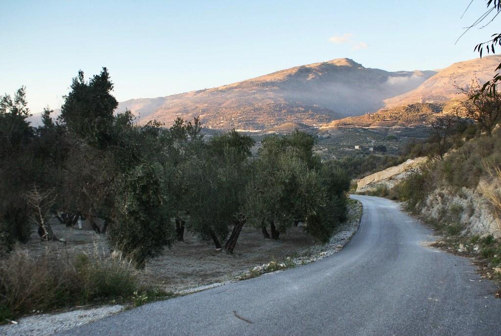 Champs d'olivier au coucher du soleil dans la Sierra Nevada en Andalousie.